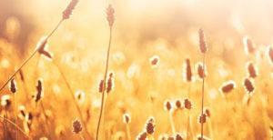 wheat Compare Boiler Quotes